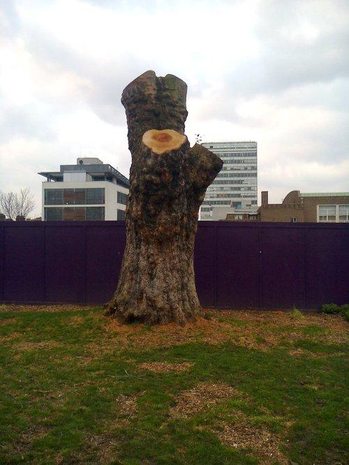 st M tree cut