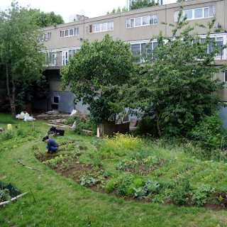 heygate allotments 2